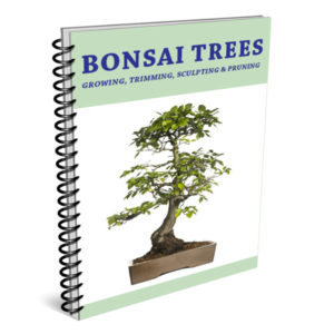 Bonsai Trees - Growing, Trimming, Sculpting & Pruning