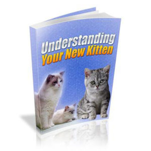 Understanding Your New Kitten